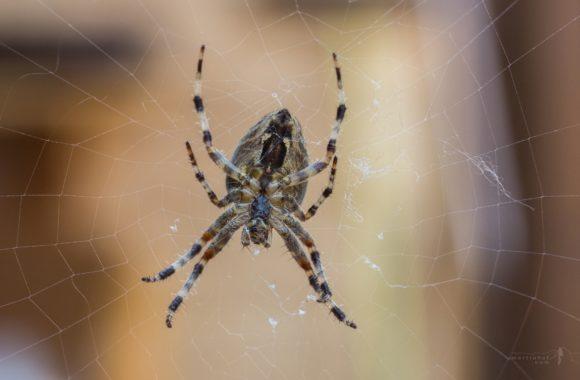 Pavoučí podvozek