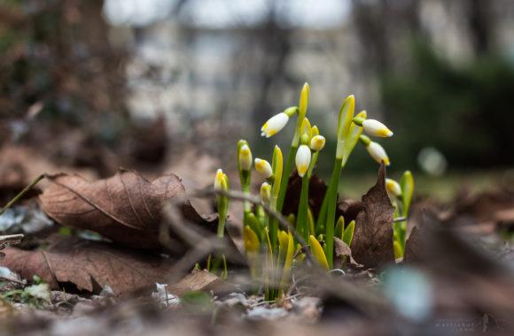 Když přichází jaro… #1