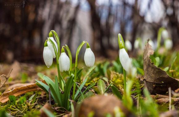 Když přichází jaro…#3