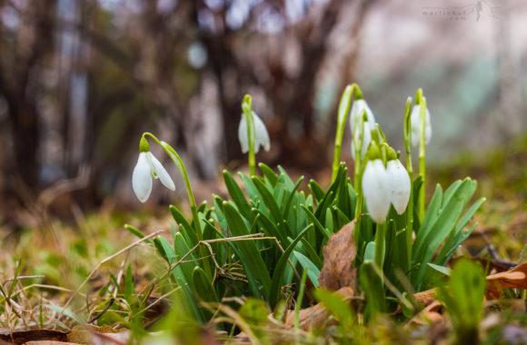 Když přichází jaro…#2
